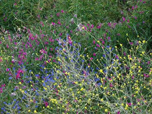 RONDA: A rainbow of roadside flowers.