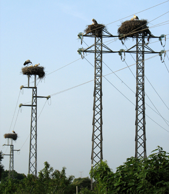 RONDA: Families of storks raise their young atop electrical towers lining the tracks near San Roque.