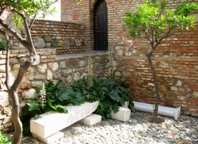 MALAGE: Acanthus blooming in a patio.