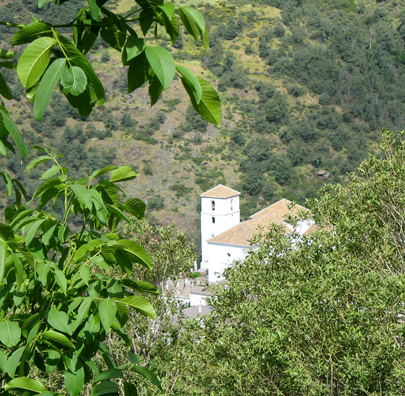 LAS ALPUJARRAS: View through the trees of the church in Bubión.