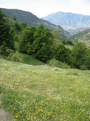 LAS ALPUJARRAS: Flowers covered the fields we hiked through.