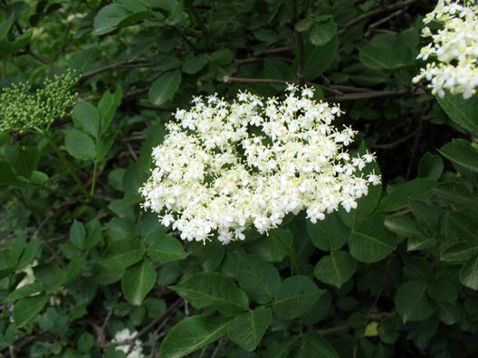 LAS ALPUJARRAS: A natural bouquet.