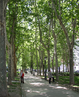 """MADRID: The broad, leafy boulevard in front of the Prado is called, logically enough, the """"Paseo del Prado,"""" but while we were there it was not entirely peaceful. We missed it, but we read about a large demonstration led by Baroness Carmen Thyssen against a plan to transplant or destroy many of these majestic trees in an ambitious rebuilding plan."""