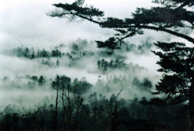 MT. EMEI: The site is famed for its views of misty forests below (commercial photo).