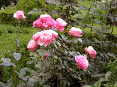 ALHAMBRA: . . . past the roses . . .