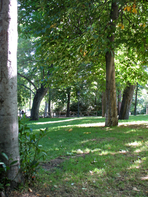 MADRID: We rested for a while in the shade of tall trees.