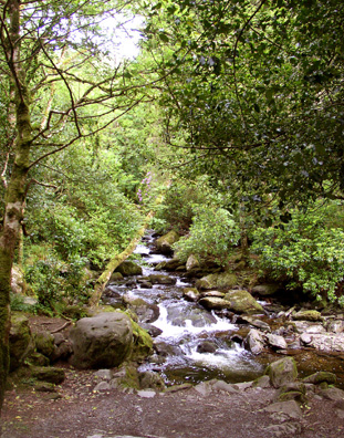 KILLARNEY NAT. PARK: After Kilkenny, we drove along narrow, winding mountain roads through Killarney National Park. The views were breathtaking, if damp (it rained off and on all day). This is the stream just below the famous Torc Waterfall. The surrounding moss-covered forest is breathtakingly beautiful--it seemed like we had entered Tolkein's Middle Earth. The tiny pink streaks in the center of the picture are branches of wild rhododendrons in bloom.