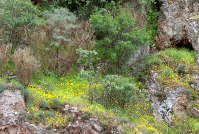 ANDALUCIA: From now on the fields and hills were carpeted with green grass and wildflowers. May is the perfect time to view the countryside of Andalucia—after the rains and before the scorching heat turns everything brown.