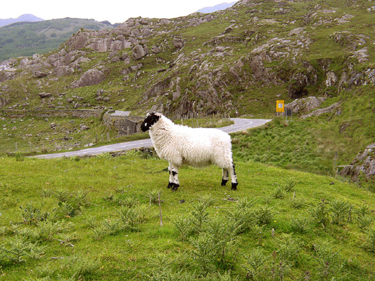 KILLARNEY NAT. PARK: Higher up in the park is a rare chance to pull off the extremely narrow road and admire the landscape: Ladies View.