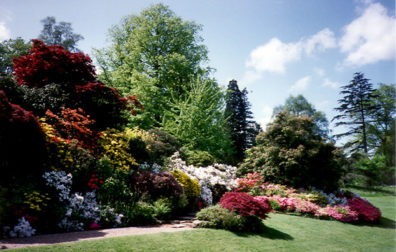 HEVER CASTLE: Flowers in the garden.