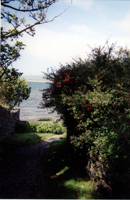 DINGLE BEACH: Long stretches of the road around the Dingle Peninsula are lined with hedges of wild fuchsias like this.