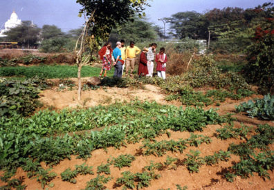 WSU tour members examine village vegetable plot.