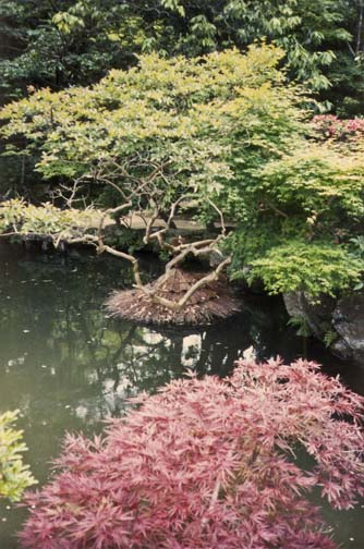 NARA: We couldn't figure out what the straw structure surrounding the base of the shrub in the water was.