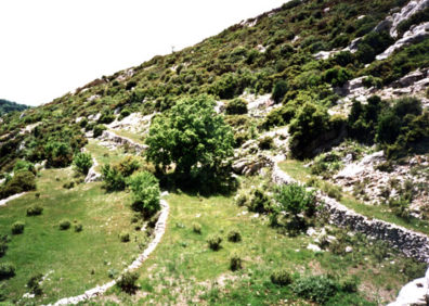 ARCADIA: Throughout the countryside there are numerous walls made of Greece's most abundant natural resource: rocks. They delineate tiny fields which through inheritance represent the many-times-repeated fragmentation of land holdings.