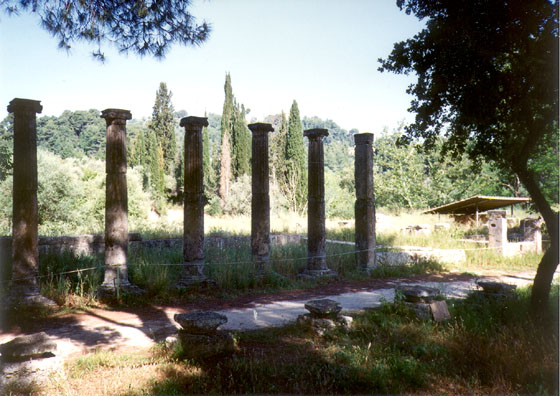 OLYMPIA: A row of columns against a row of cypresses.