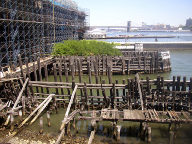 NEW YORK: The ferry docks are being extensively redeveloped as a major tourist attraction, but the crumbling older piers have meanwhile sprung a small forest of young trees among their planks.