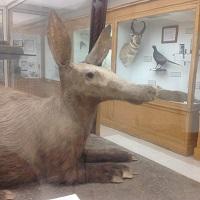 Aardvark mount