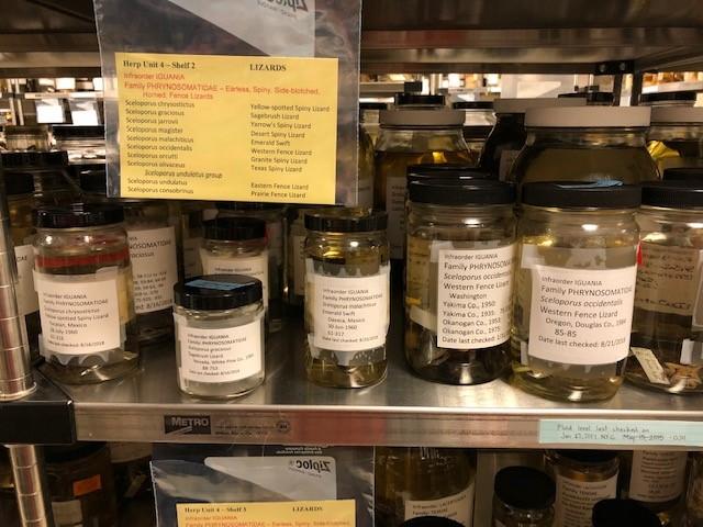 Inventoried herp jars