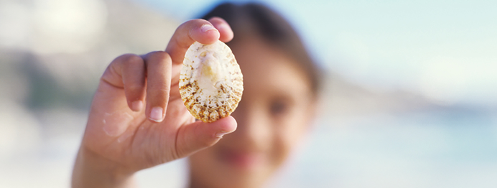 person holding up empty sea shell