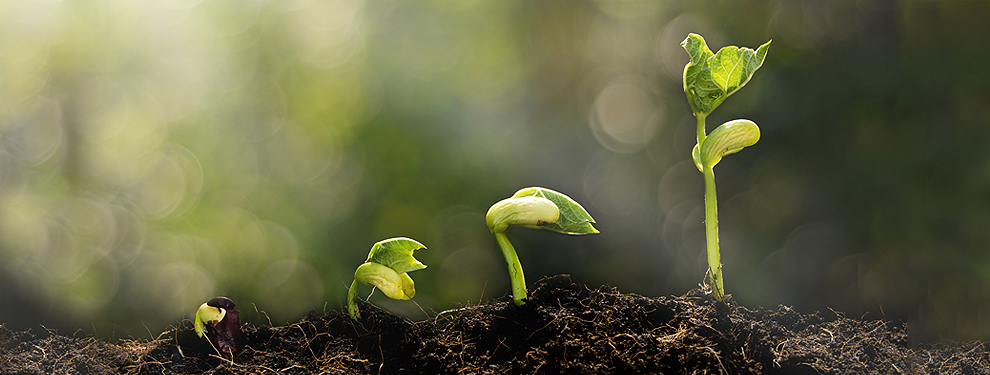 plant seedlings at various stages of growth