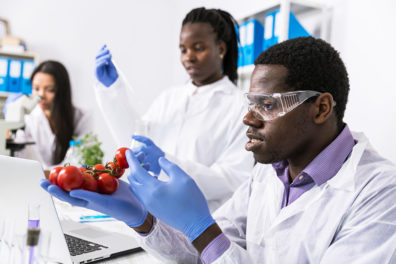 Photo: Laboratory technicians verify the quality of vegetables.