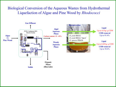 Biological Conversion of the Aqueous Wastes from Hydrothermal Liquefaction of Algae and Pine Wood