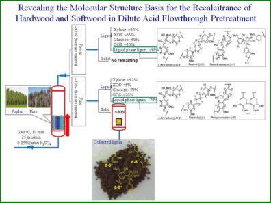 Revealing the Molecular Structure Basis for the Recalcitrance of Hardwood and Softwood in Dilute Acid Flowthrough Pretreatment