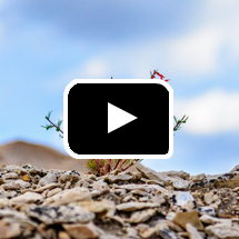 closeup of small tough plant in desert in background, playbutton in foreground