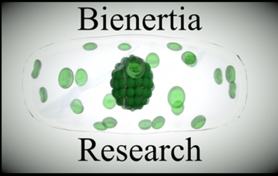 BienertiaResearch
