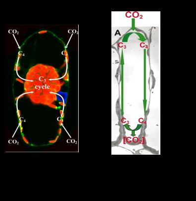 SCC4_diagrams