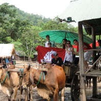 Faculty-led Business in Northern Thailand Business students share an oxen cart ride in Elephant Park, Chiang Mai, Thailand. Photo submitted by Lorie Mochel.