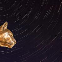 WSU Coug Pride Statue Under the Stars