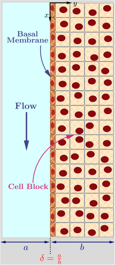 Tissue mimic inside a microfluidic channel