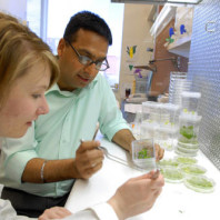 Plant_Biosciences_Professor_Amit_Dhingra_Works_with_Graduate_Students_on_Research