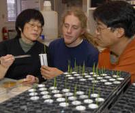 Plant_Pathology_Professor_Pat_Okubara_Works_with_Graduate_Students_in_Lab