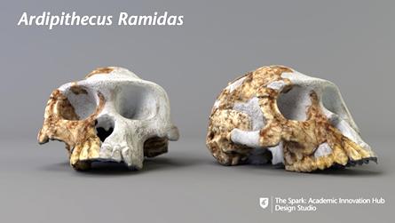 A 3D scan of a skull, Ardipethecus Ramidas, created at The Spark: Academic Innovation Hub Design Studio.