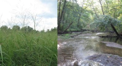 switchgrass and stream