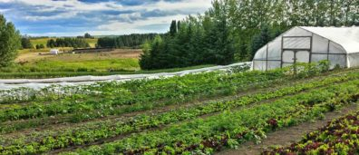 Organic Agriculture Systems