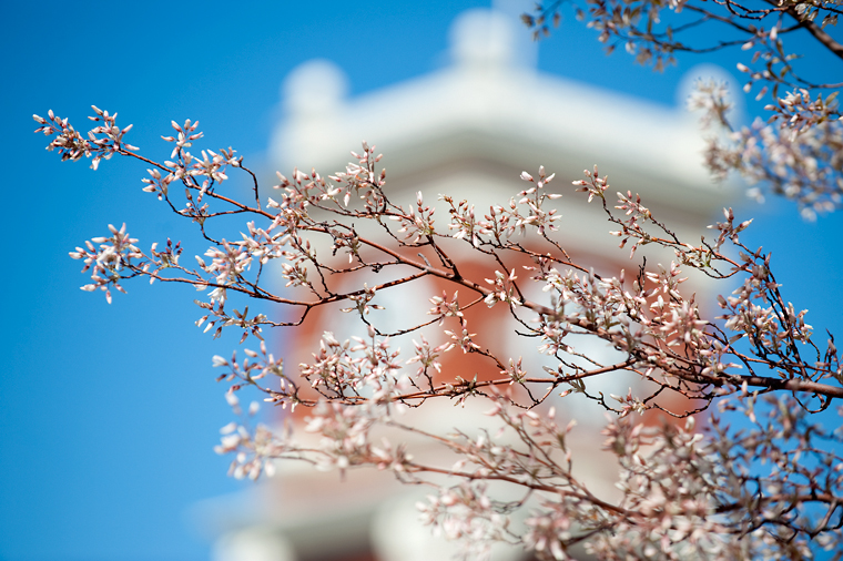 Image of spring blossoms on the Pullman campus.