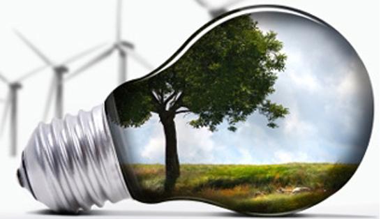 Lightbulb reflecting tree