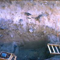 Mazama ash layer in the wall profile of the 20W trench excavated on the floodplain outside the rockshelter, July 1968