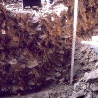 The sidewall of an excavation unit, showing the many large angular cobbles that filled the rockshelter as the roof fell over the millennia, August 1964.