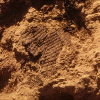 Closeup of burned basket at 101.97N 135.63E 99.68 cm, August 1970. The other half was exposed during 1969 excavation.