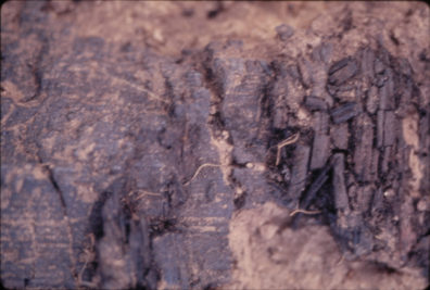 Closeup of burned matting and pole in Housepit 5, 104.63N 139.22E 99.21cm, August 1970