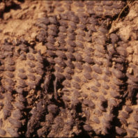 Closeup of burned basket at 101.97-101.93N 135.63-165.80E 99.68-99.58cm, August 1970