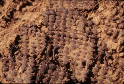Closeup of burned basket at 101.97-101.93N 135.63-165.80E 99.68-99.58cm, August 1970