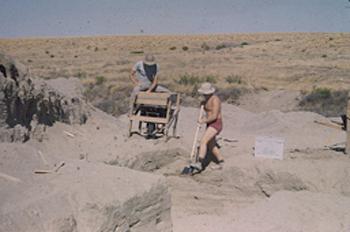 Excavators Mitter and Fine 1951
