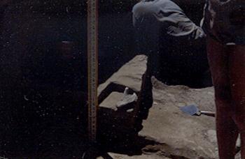 Scapula in situ 1951