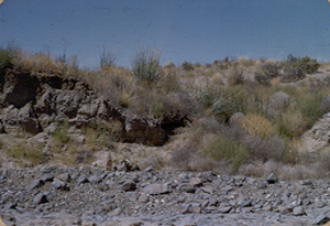A view of the tested site 1950