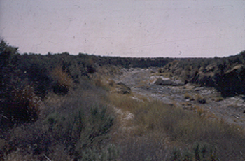 View of Weber Coulee near the highway 1951
